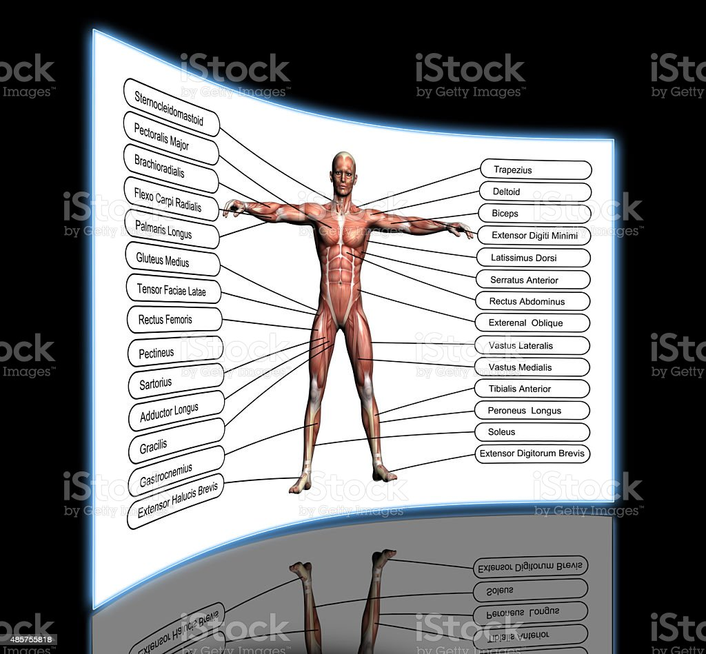 High resolution concept or conceptual 3D human anatomy stock photo