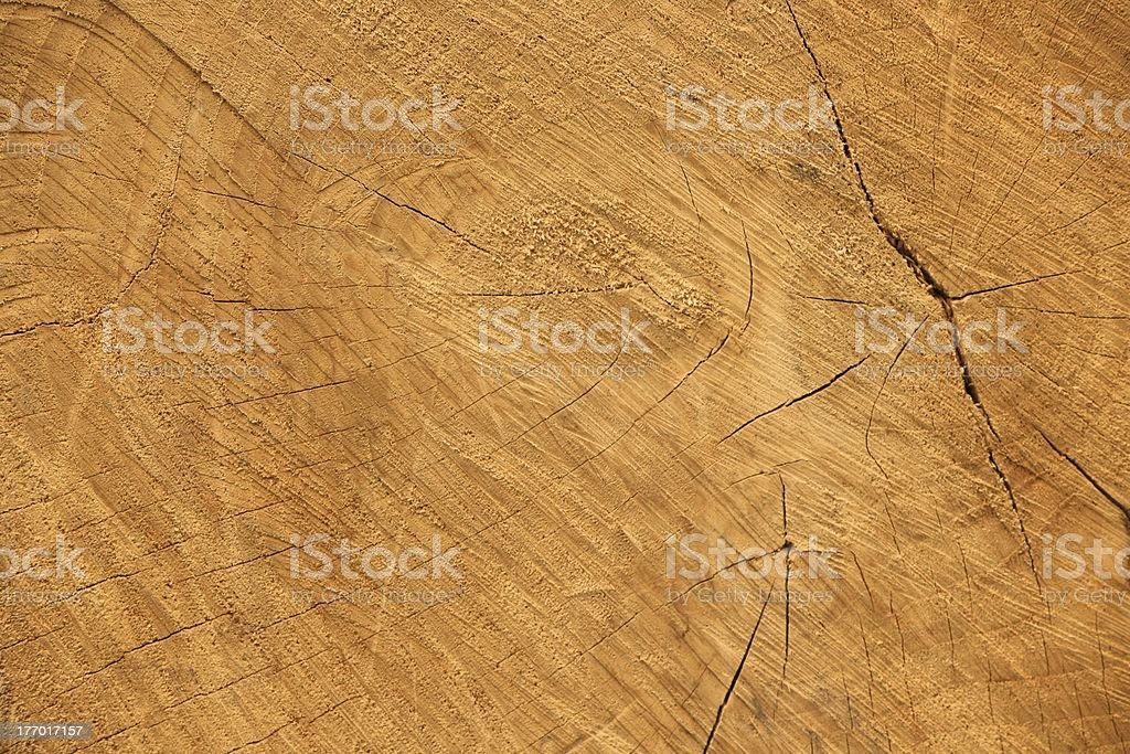 High Resolution Natural Wood forest tree royalty-free stock photo