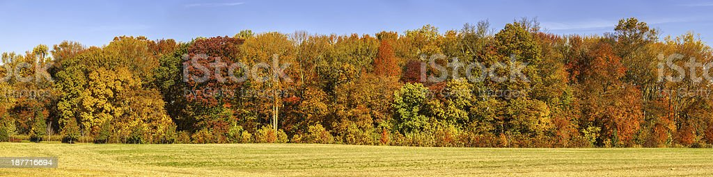 High Resolution Panorama of Autumn Treeline on Clear Sunny Day stock photo