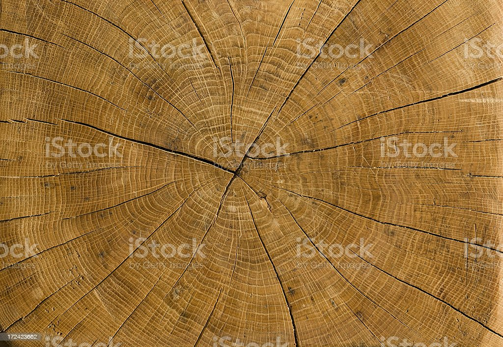 High resolution trunk profile from old, dried German Oak. royalty-free stock photo