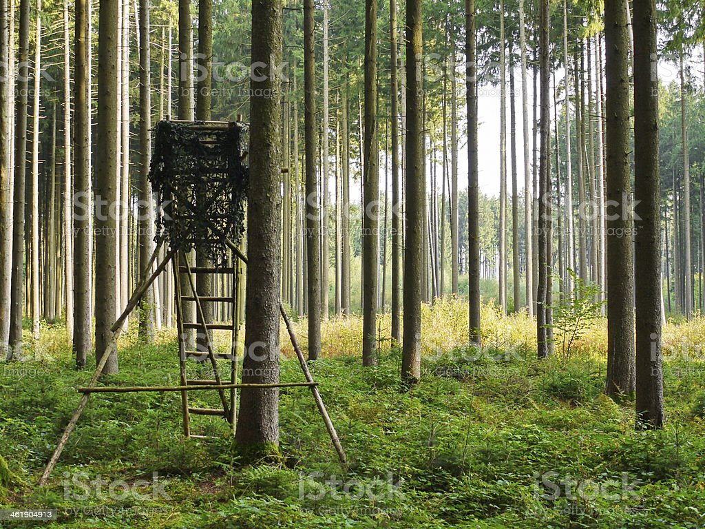 high seat in forest stock photo