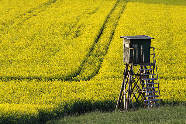 High seat on a rape field High seat on a rape field hunting blind stock pictures, royalty-free photos & images