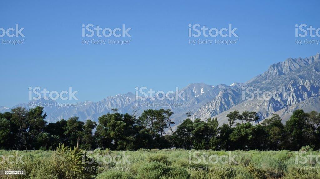 High Sierra Sage stock photo