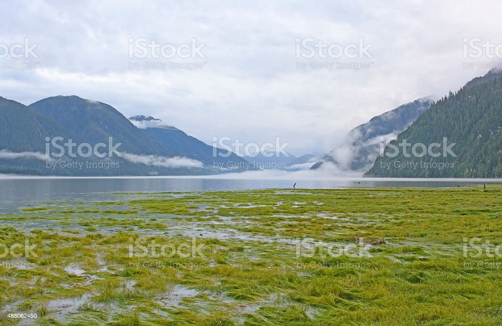High Tide in a Foggy Fjord stock photo