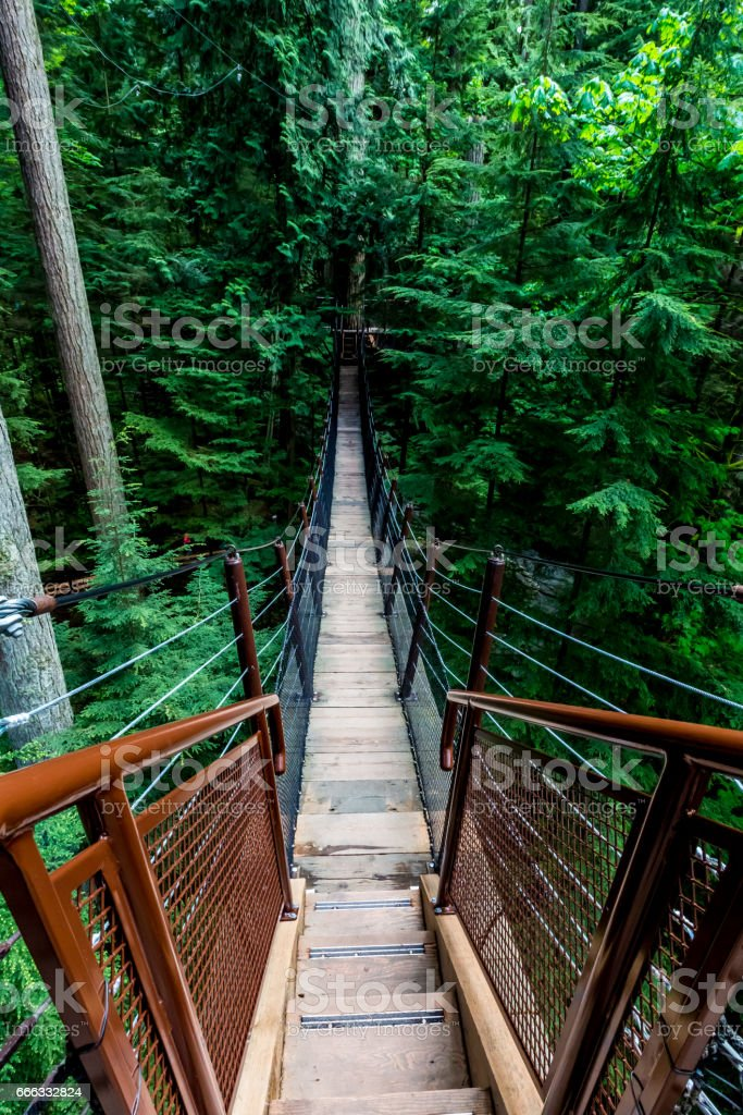 High Up in the Beautiful Capilano Tree Top Suspension Bridge in Vancouver. stock photo