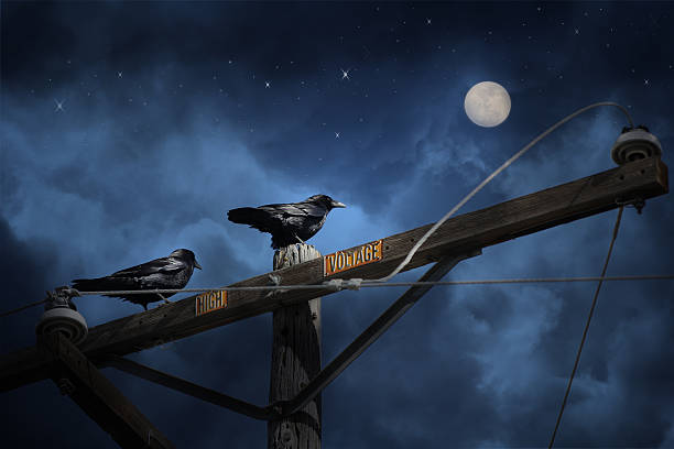 High Voltage Crows on a telephone wire. stock photo