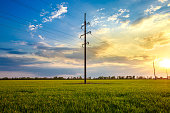 High voltage line at sunset or sunrise on a green wheat field