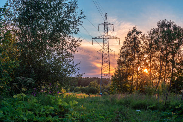 High voltage power line in forest at sunset stock photo