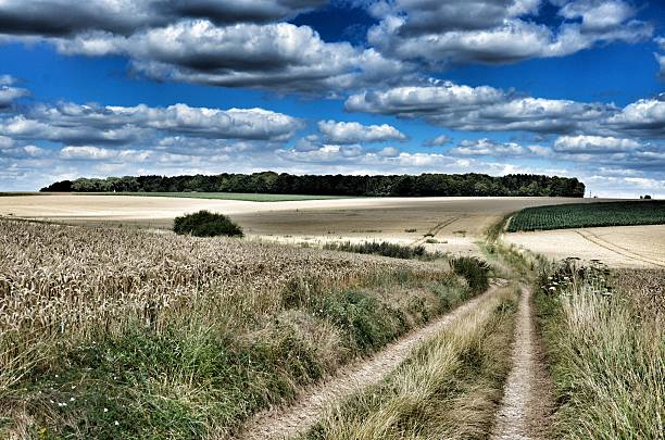 High Wood Battlefield, Somme General view of the main Somme battlefields at High Wood scene of two months fighting and the loss of more than 8,000 British soldiers killed in 1916. somme stock pictures, royalty-free photos & images