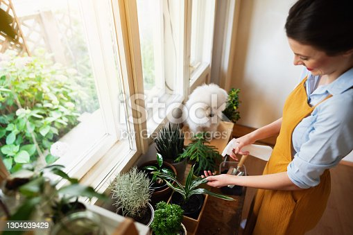High-angle view of a happy woman spraying her plants while her dog makes her company