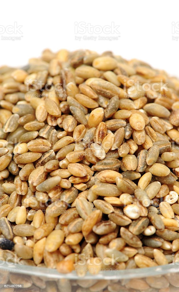 Highland barley is a variant of barley, mainly in Tibet, photo libre de droits