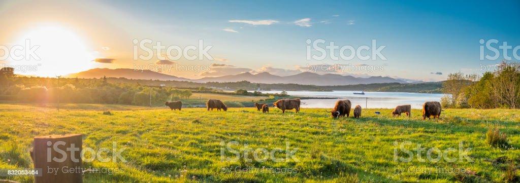 Vache Highland avec un loch écossais en arrière-plan - Photo
