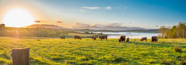 Highland Kuh mit einem schottischen Loch im Hintergrund – Foto