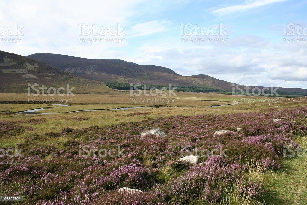 Highland heather royalty-free stock photo