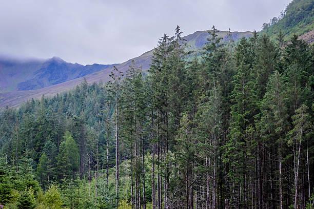 highland-pinien - nevis tal stock-fotos und bilder