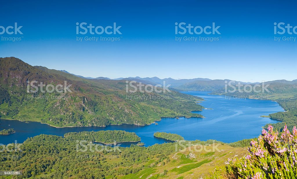 Highlands and heather royalty-free stock photo