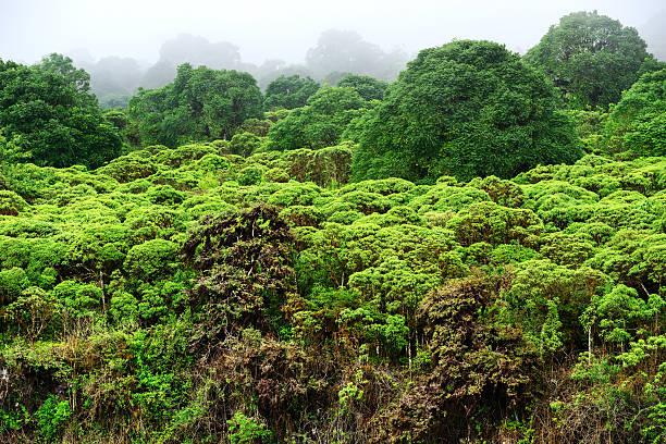 Highlands Vegetation on Sana Cruz, Galapagos Islands stock photo