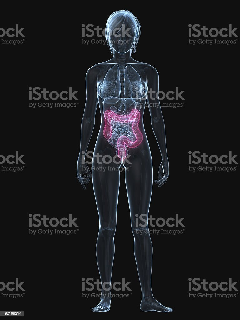 highlighted colon royalty-free stock photo