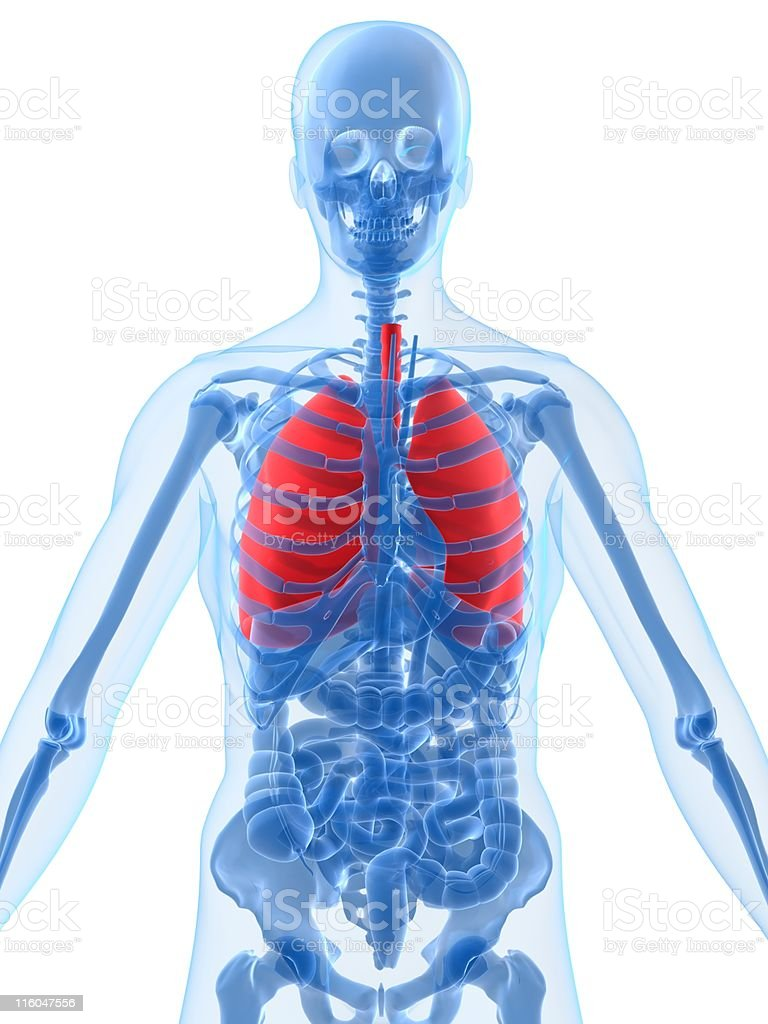 highlighted lung royalty-free stock photo