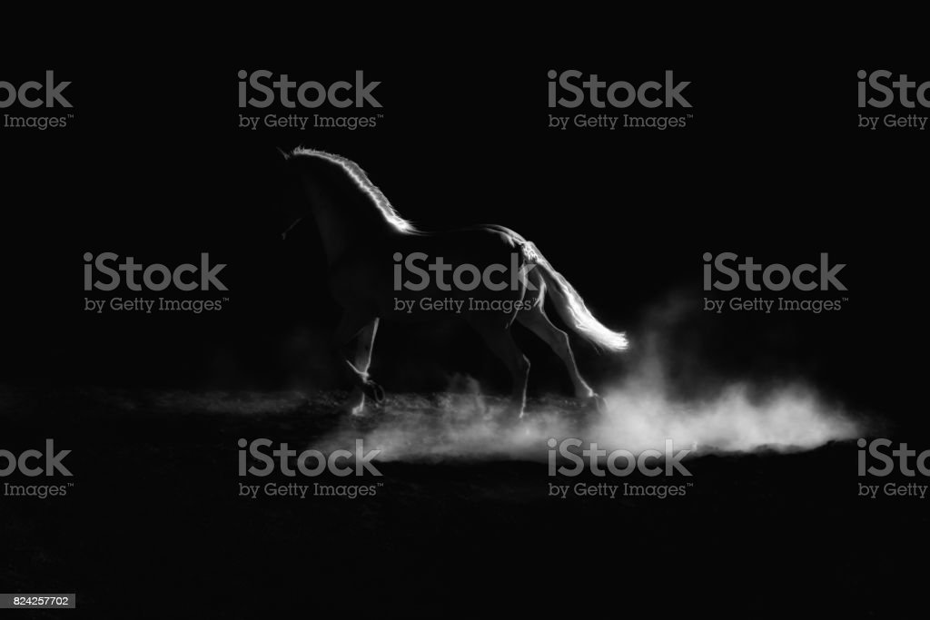 Highlighted outline of a running horse. Low key, black and white artistic image. – zdjęcie