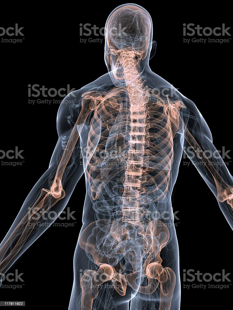 highlighted skeleton royalty-free stock photo