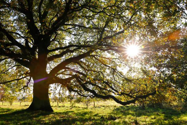 Arbre très ramifié en contre-jour en automne - Photo