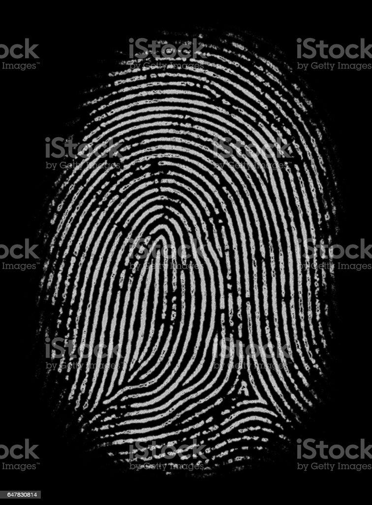 Highly Detailed Fingerprint stock photo