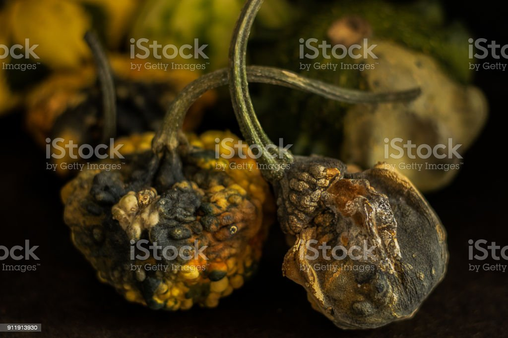Highly textured rotten gourds stock photo