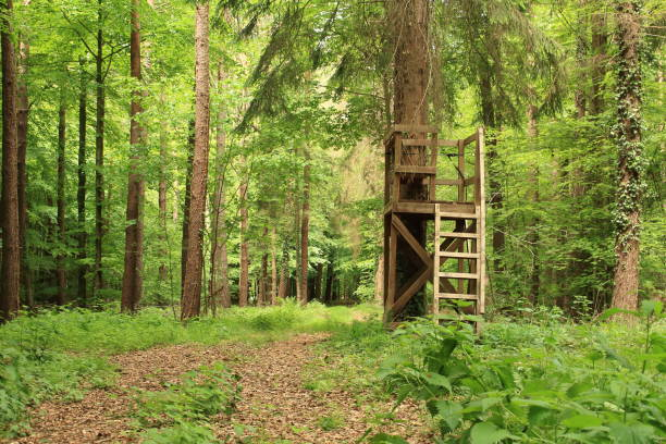 High-seat ein Hochsitz im grünen Wald hunting blind stock pictures, royalty-free photos & images