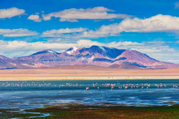 Hoch Berge Reserve - Anden-Flugzeug - Altiplano Andino - Tara Salzsee reservieren - Salar de Tara - Flamingo Zuflucht – Foto
