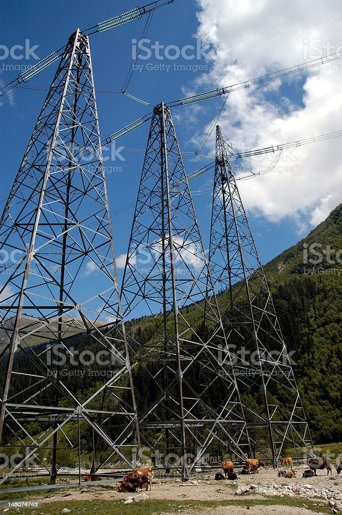 High-voltage cows royalty-free stock photo