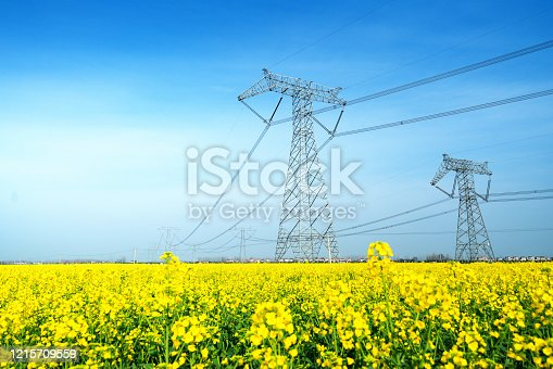 油菜花田地裡的高壓輸電塔