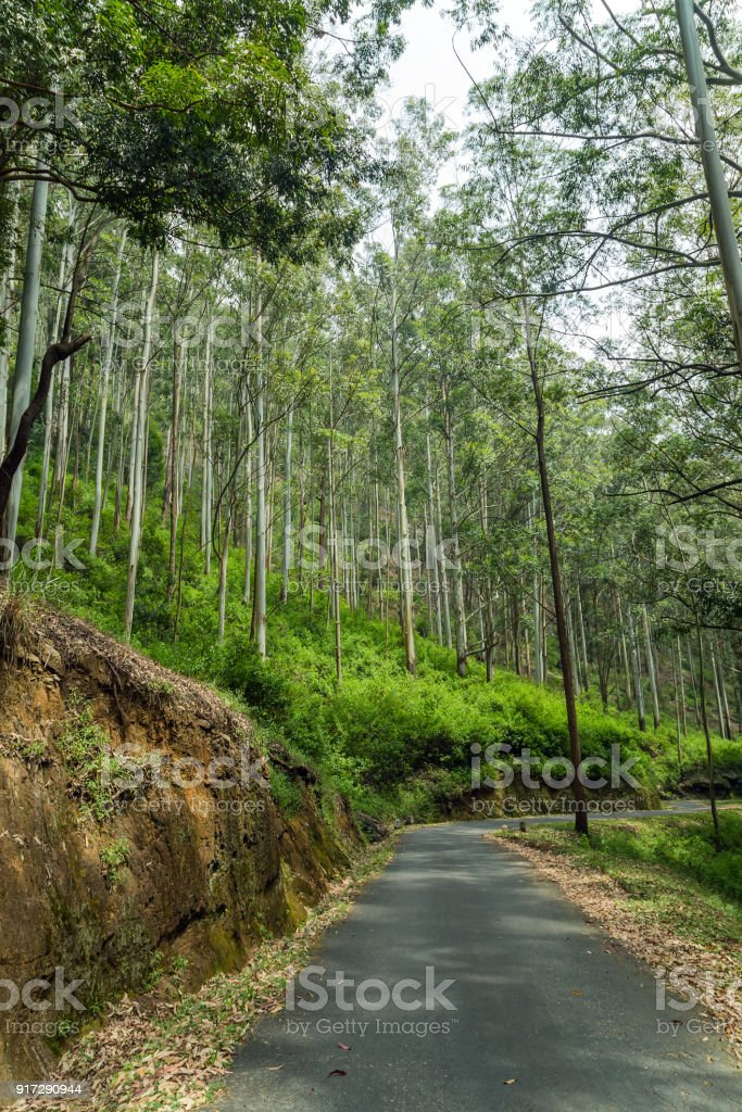Highway in Horton Plains National Park highlands of Sri Lanka and is covered by montane grassland and cloud forest. Ceylon, Asia. stock photo