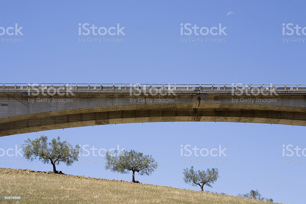 highway on the olive orchard royalty-free stock photo