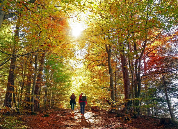 hike in the autumn forest - woodland stock pictures, royalty-free photos & images