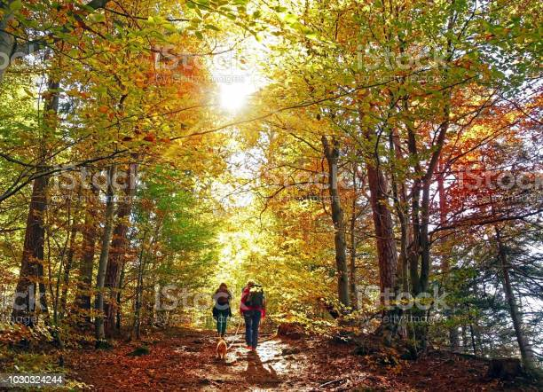 Photo of hike in the autumn forest