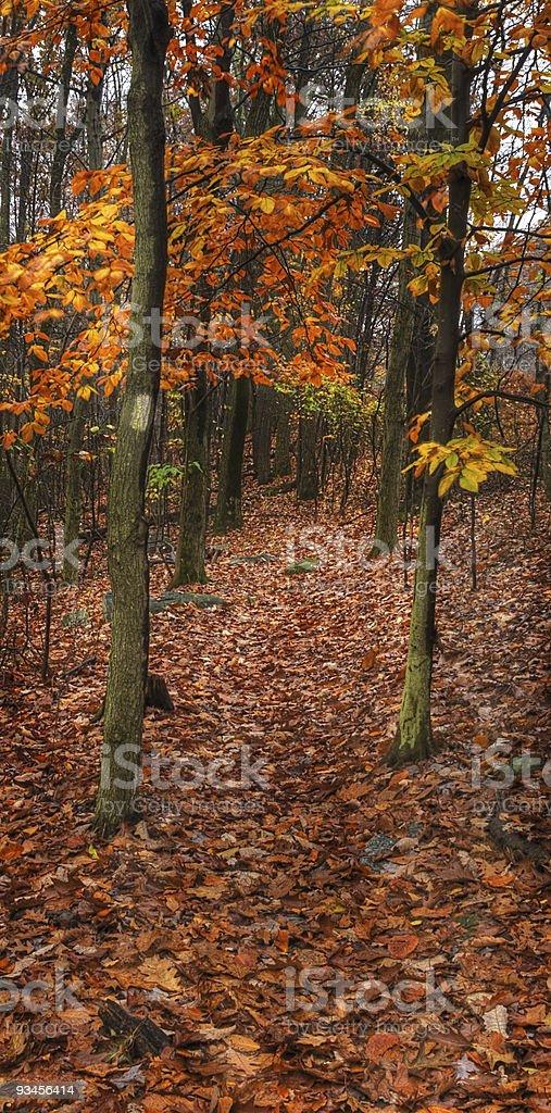 Hike the Applachian Trail stock photo