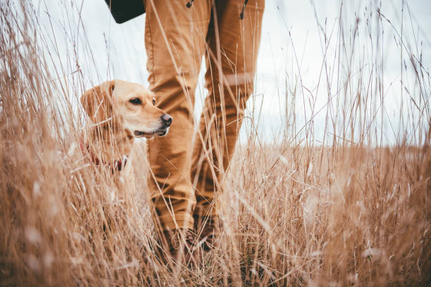 hiker and dog in grassland - hunting stock photos and pictures