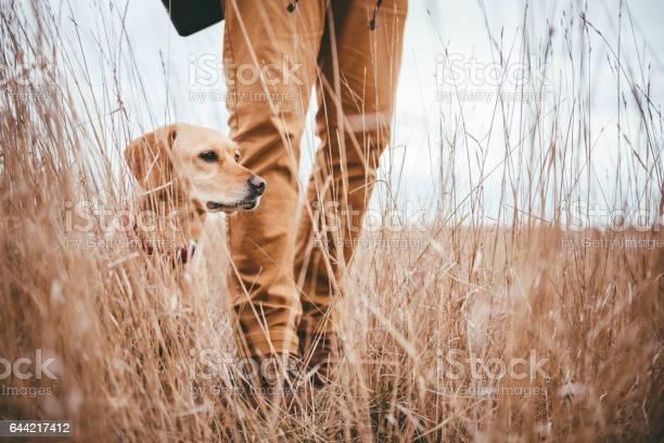Wanderer Und Hund In Grünland Stockfoto und mehr Bilder von Abenteuer