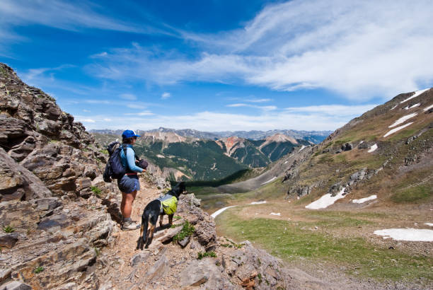 Hiker and Dog Looking at the View A young woman hiker and her companion dog look out over the San Juan Mountains from 12,000' Columbine Lake Pass in the San Juan National Forest near Silverton, Colorado, USA. san juan mountains stock pictures, royalty-free photos & images