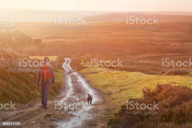 Hiker and their dog walking along a wet dirt track at sunset in the picture id888374102?b=1&k=6&m=888374102&s=612x612&h=4ydtvcplercscwcynmtdjutzxtptygvvmfhvu8d gxa=