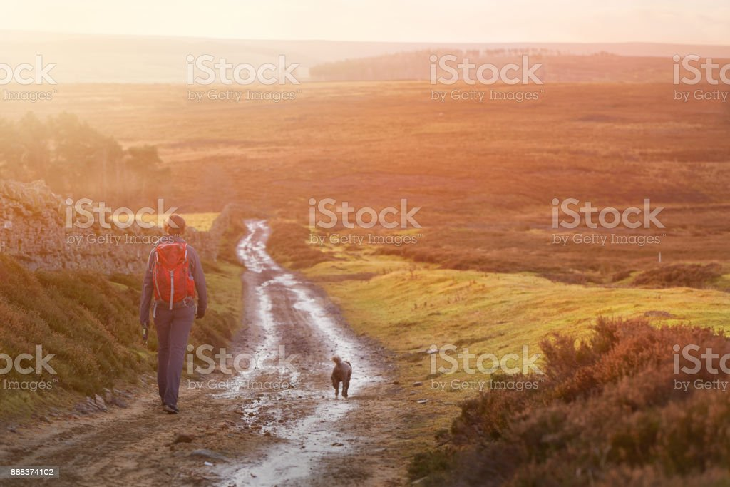 A hiker and their dog walking along a wet dirt track at sunset in the English Countryside. Edmondbyres Common. stock photo
