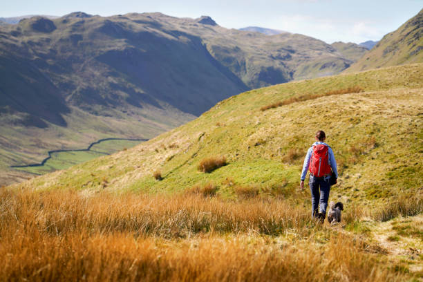 A hiker and their dog walking along Low Moss Gill below the summits of Place Fell and High Dodd in the Lake District, UK. A hiker and their dog walking along Low Moss Gill below the summits of Place Fell and High Dodd in the Lake District, UK. english lake district stock pictures, royalty-free photos & images