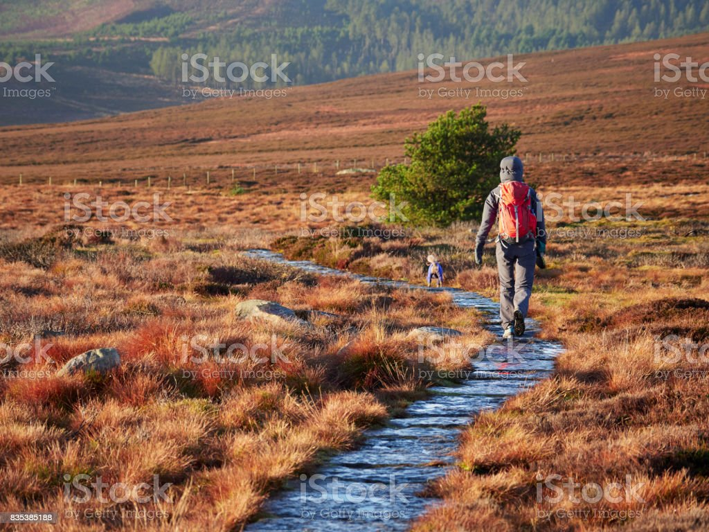 A hiker and their dog walking in the Northumberland countryside, Simonside near Rothbury, England, UK. A hiker and their dog walking in the Northumberland countryside, Simonside near Rothbury, England, UK. Activity Stock Photo