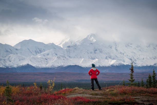 Hiker at mountain top with direct view of the Denali Mountain stock photo