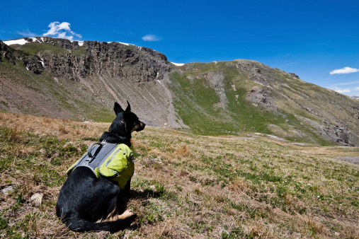 Hiker Dog Looking At The View Stock Photo - Download Image Now