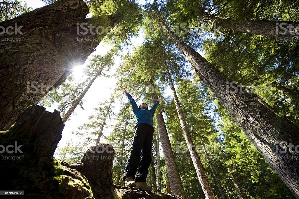 A hiker enjoying the temperate rainforest stock photo