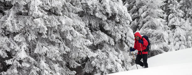 Hiker go on slope with new-fallen snow in snow-covered forest - foto stock