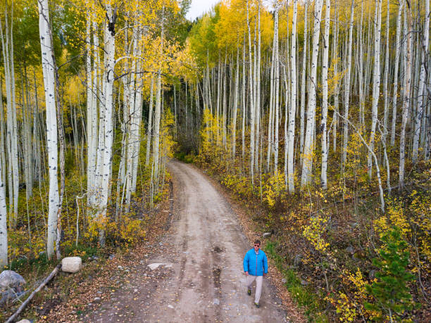 Hiker Hiking on Country Roads Hiker Hiking on Country Roads - Dirt road with scenic autumn fall aspen trees and hiker recreating and enjoying the outdoors. minturn colorado stock pictures, royalty-free photos & images