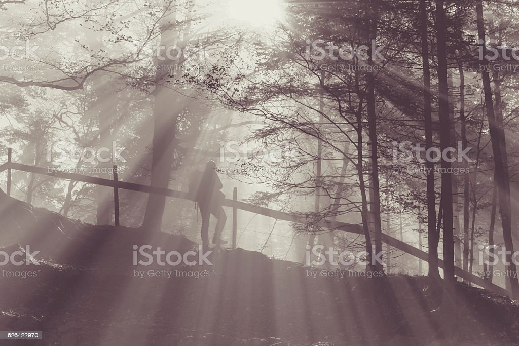 Hiker in a foggy forest stock photo